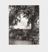 Cottonwoods, Adams, Robert, Steidl Verlag, EAN/ISBN-13: 9783958290969