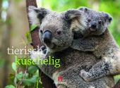 Tierisch kuschelig 2020, Ackermann Kunstverlag, EAN/ISBN-13: 9783838430102