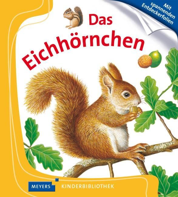 : Das Eichhörnchen