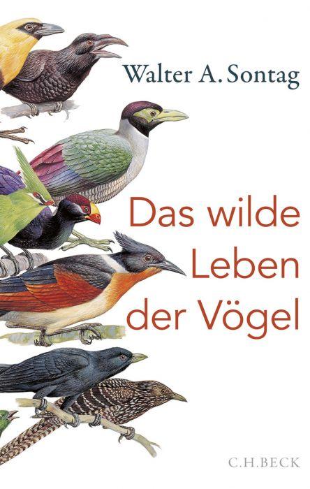 Sontag, Walter A: Das wilde Leben der Vögel