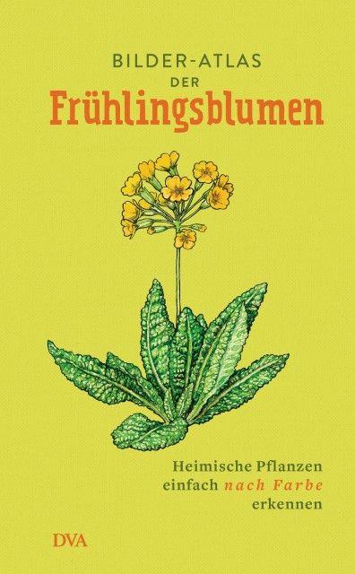 : Bilder-Atlas der Frühlingsblumen