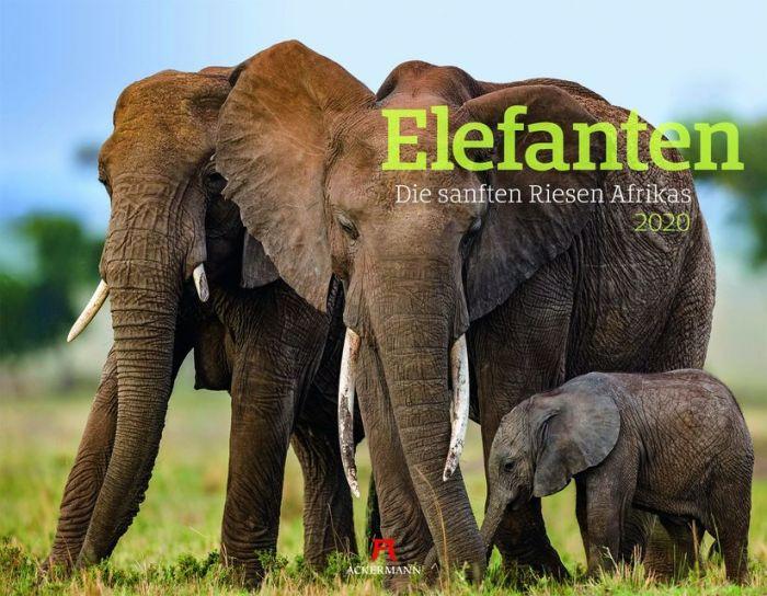 : Elefanten 2020