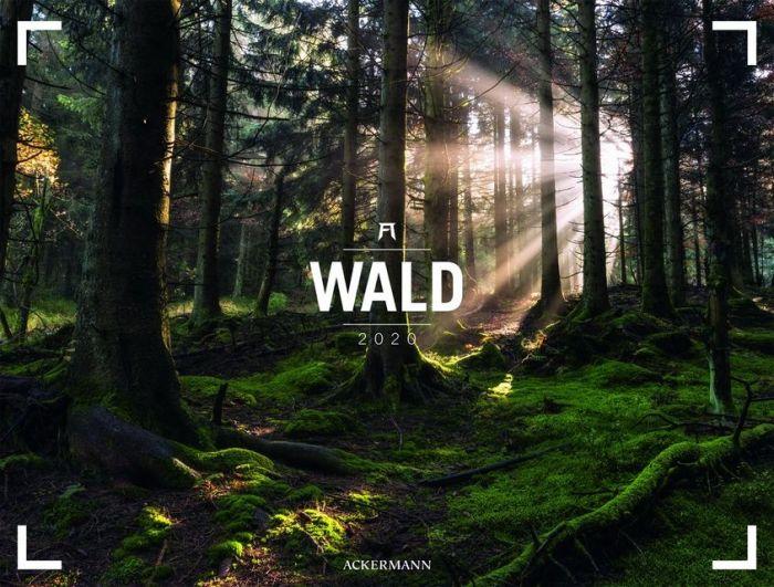 : Wald - Ackermann Gallery 2020